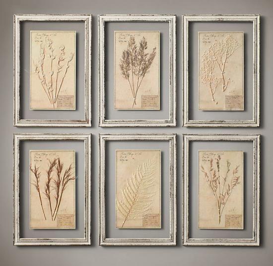 ヴィンテージ感のある植物標本
