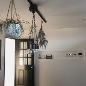 専用フックで植物をハンギングする