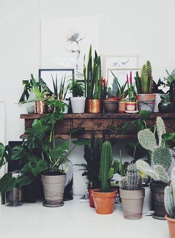 植物を固め置きする