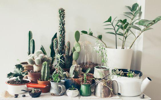植物が持つ色とポット(鉢)使いも大切
