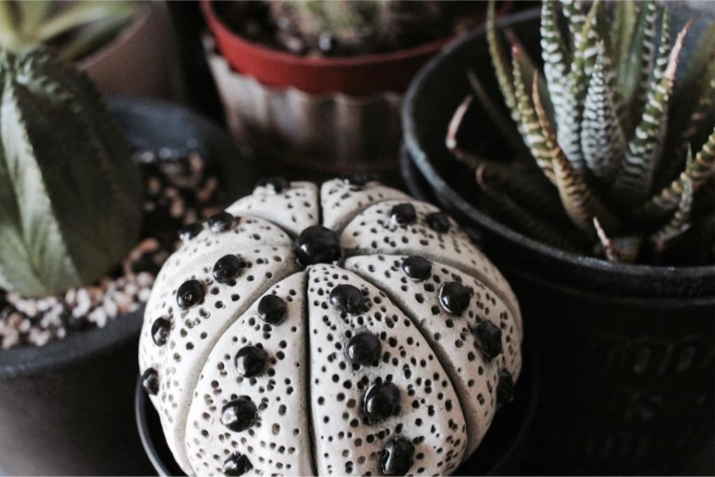 リアルと見間違う陶器製のサボテンと塊根植物