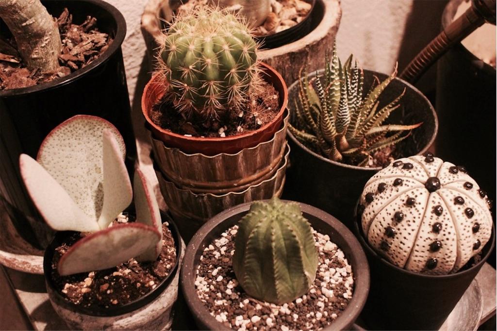 塊根植物&多肉植物と一緒に並べた陶植