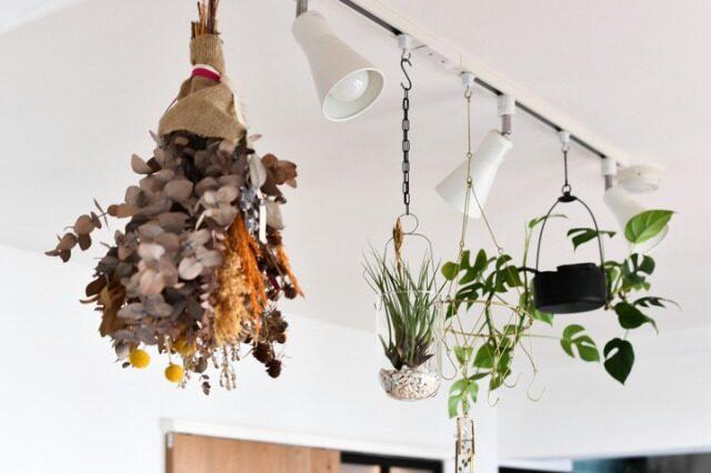 ダクトレールに植物を吊るす方法